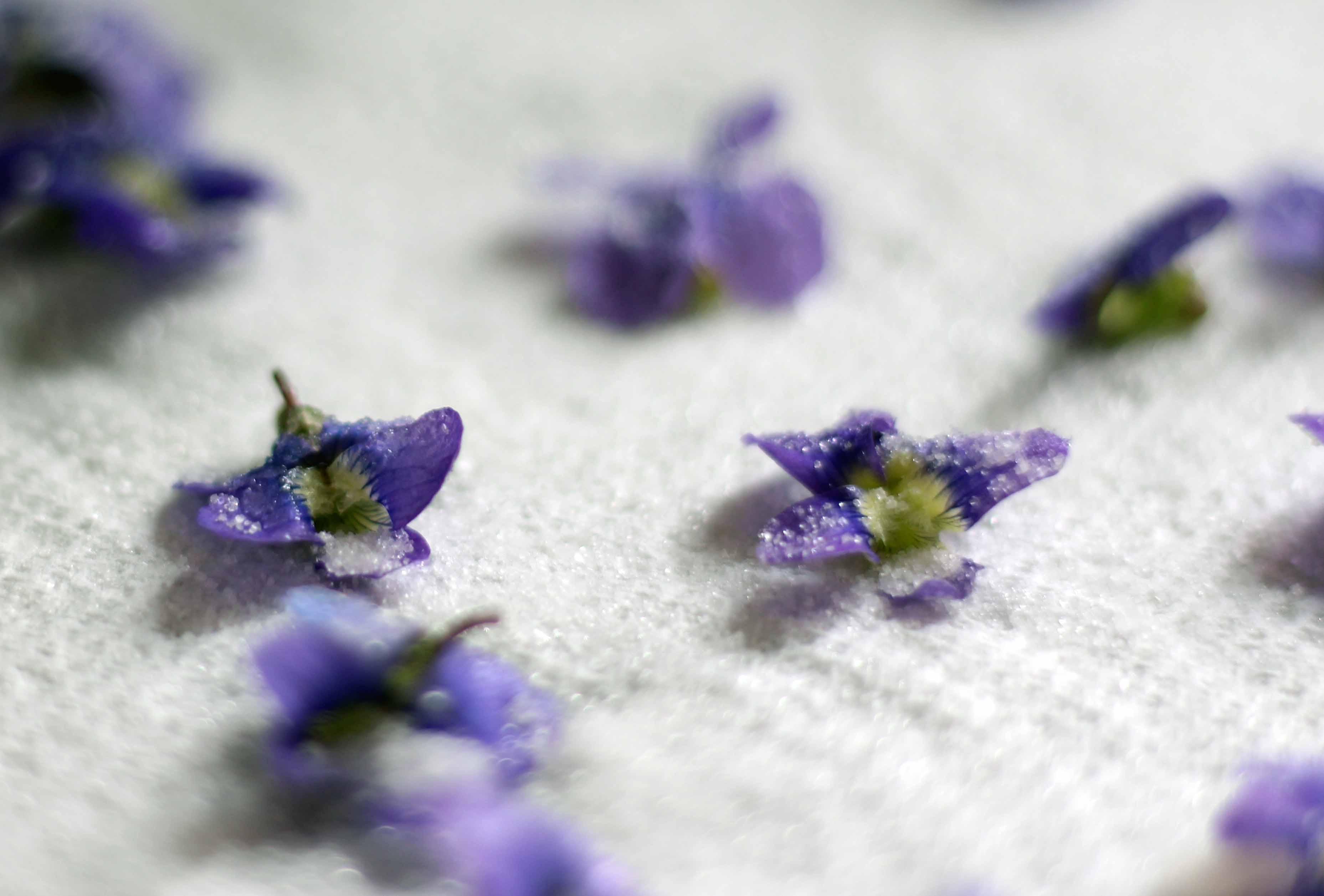 sugar on violets
