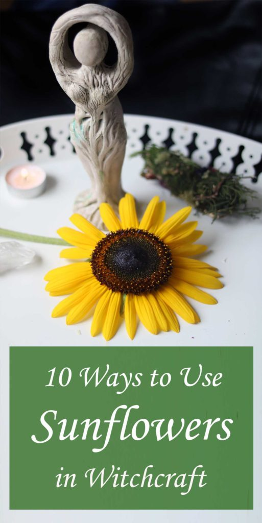 How to use sunflowers in witchcraft, magick and spells.