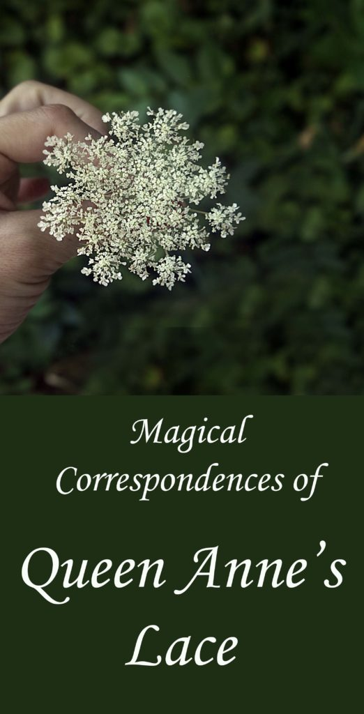 Magickal correspondences of Queen Anne's lace.