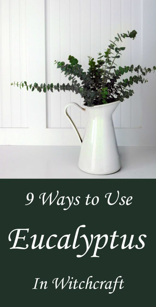 If you've got eucalyptus, you've got yourself some witchcraft. Here's a few creative ways to use this mythical herb in spells and magic.