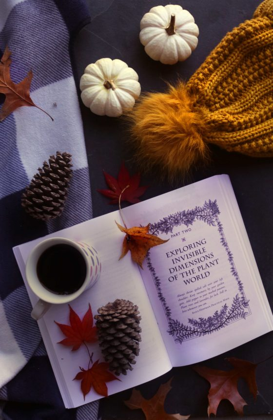 Witchy fall reading guide. Check out these 13 fall-themed witchcraft books and get ready to curl up by the fire for a long afternoon in your pajamas.