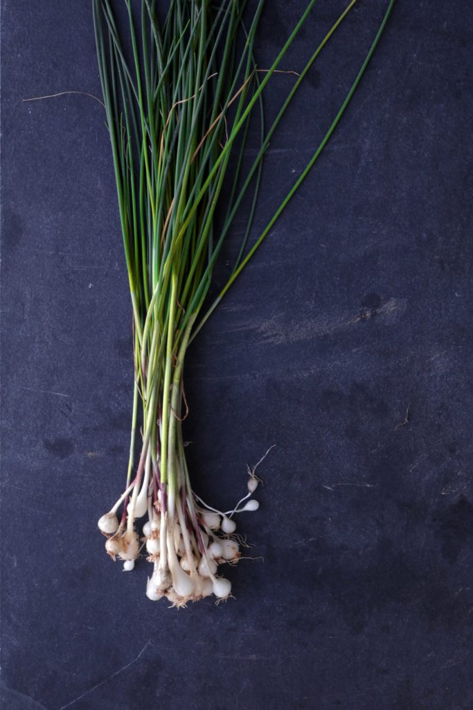 Wild onions foraged for witchcraft, spells and magic.