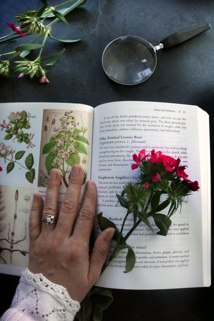 Foraging wildflowers for witchcraft.