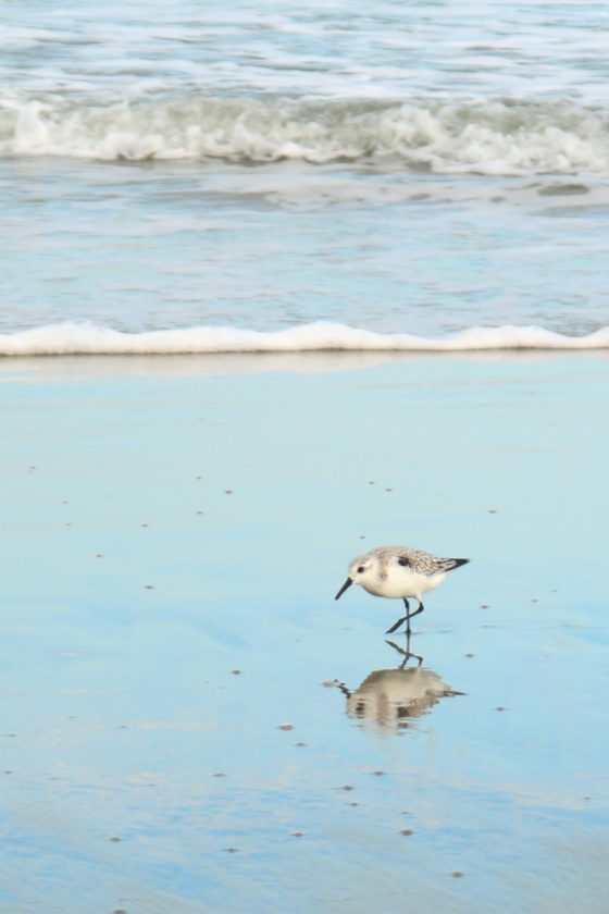 Ecotourism in the Outer Banks, NC